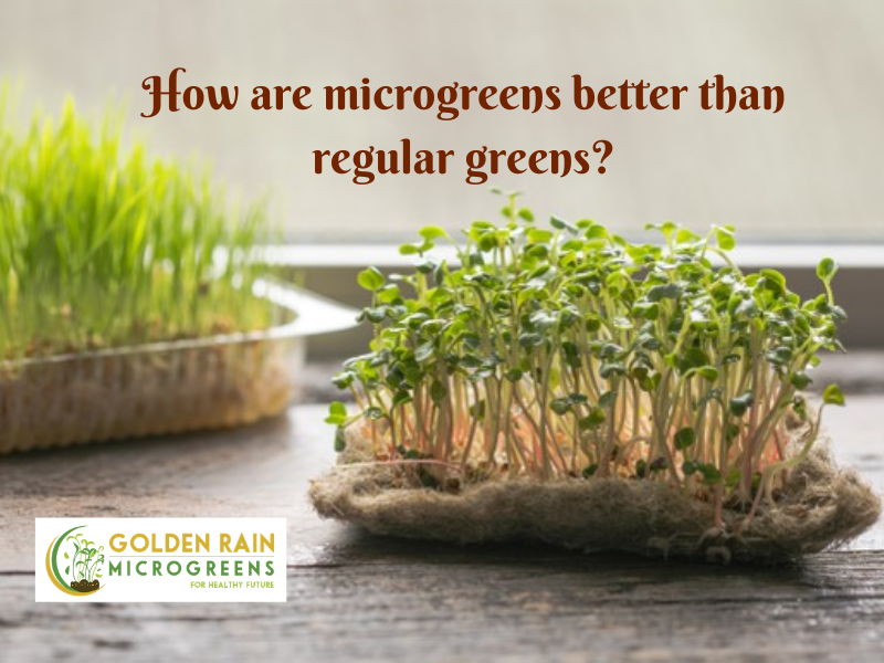How are microgreens better than regular greens?