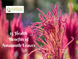 15 Health Benefits of Amaranth Leaves