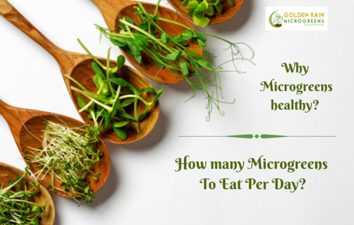 Why Microgreens healthy?