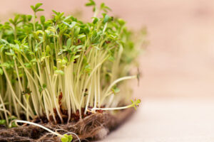 How micro greens are useful for human health problems?