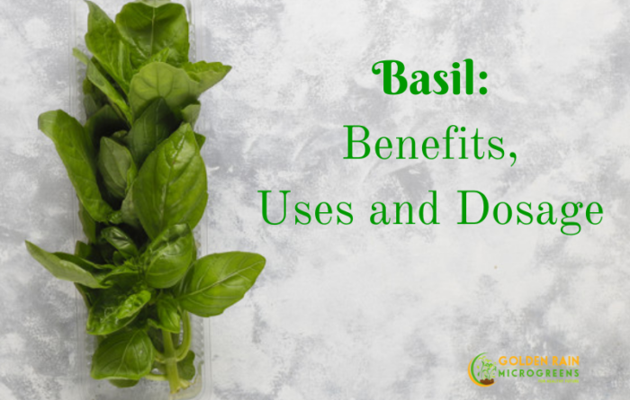 Basil- Benefits, Uses and Dosage