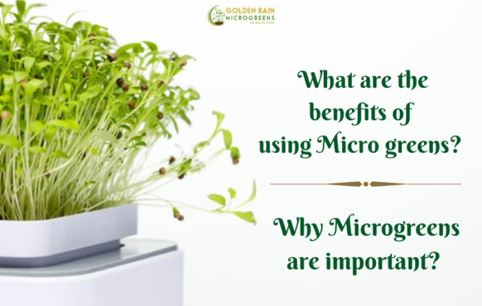 What are the benefits of using Micro greens?