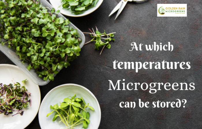 At which temperatures Microgreens can be stored?