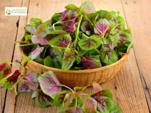 Amaranth Greens: Popular for Nutrition and Health benefits